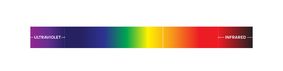 Visible Light Spectrum - Humans vs Bugs